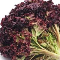 Red Frilly Lettuce 150g