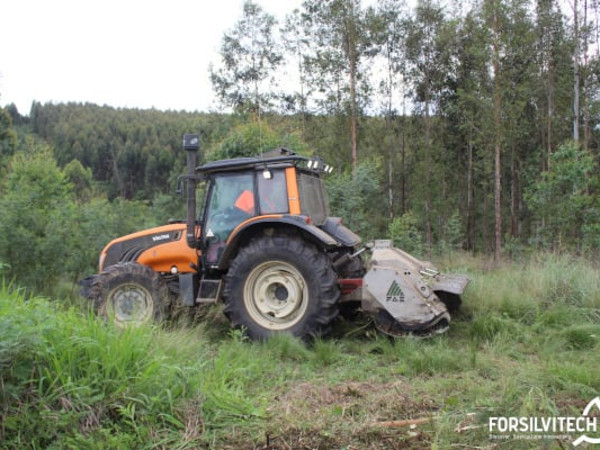 Valtra tractor with FAE head mulching an overgrown forest stand before replanting