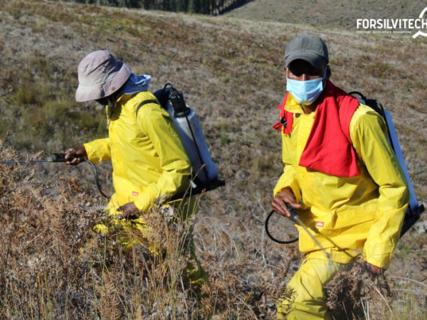 Chemical weeding with backpack sprayer