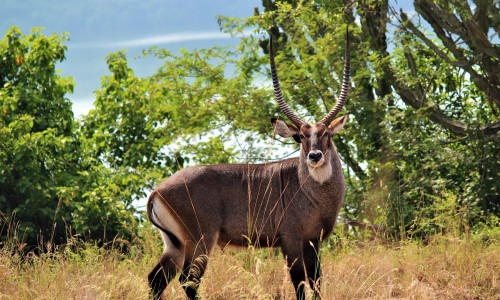 See the big 5 in one day - Pilansburg National Park day tour