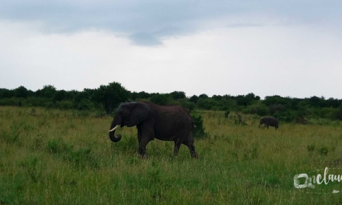 3 days Safari in Maasai Mara