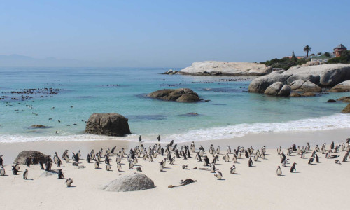 Cape Peninsula Hike & Bike