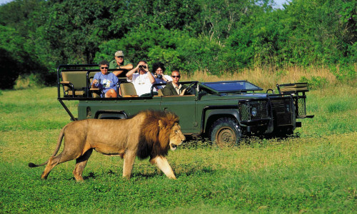 Garden Route Safari Adventure