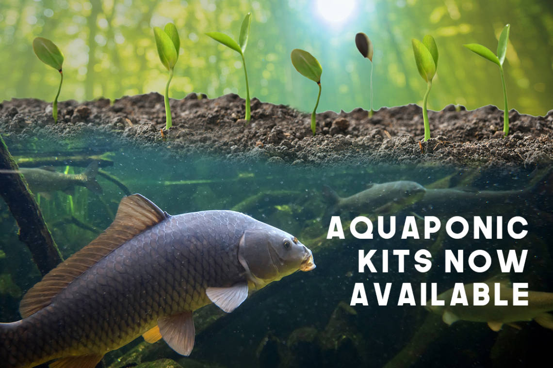 Aquaponics Products South Africa