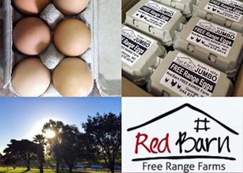 Really Free Range Farm Eggs