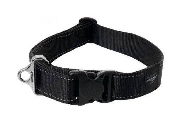 Dog Collar - XXL