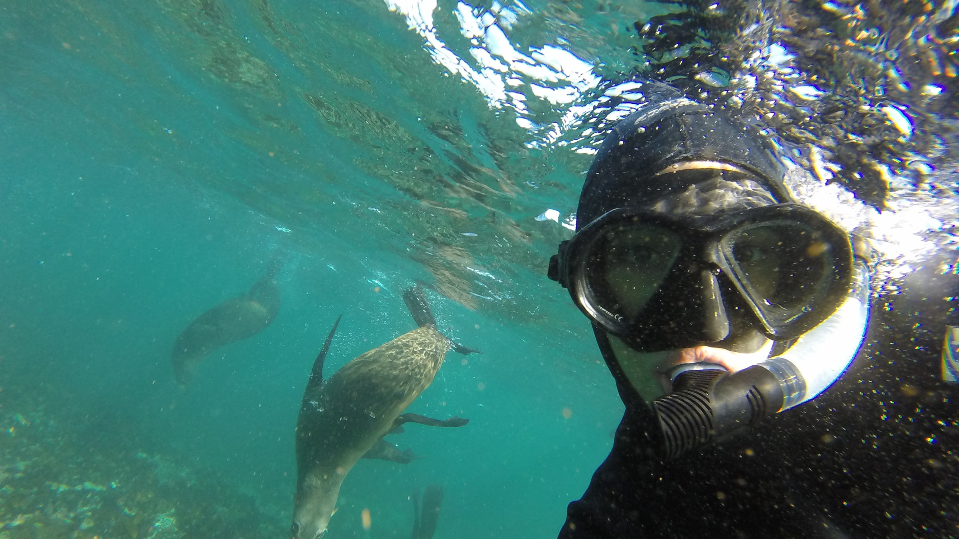 Snorkel with seals in Cape Town