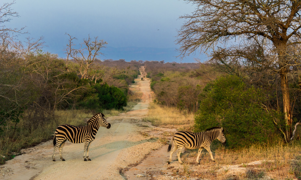 Tips for Kruger National Park