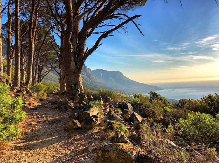 Table Mountain Pipe Track trail