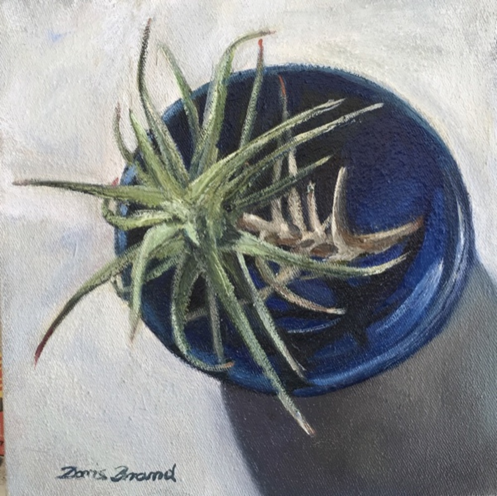 Air plant in little blue bowl