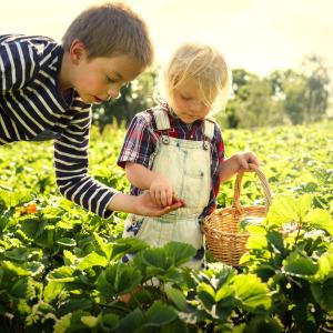 Gardenroute Family fun on a budget
