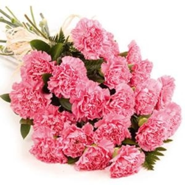 CARING CARNATIONS