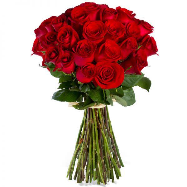 Rose Romance (24)