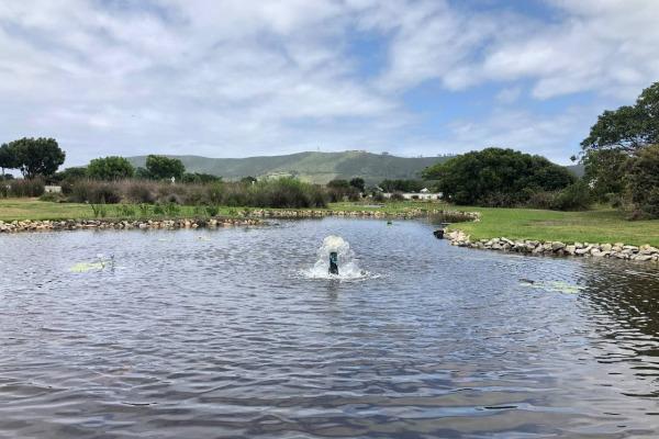 Thesen Island Ornamental Ponds Rehabilitation – December 2020