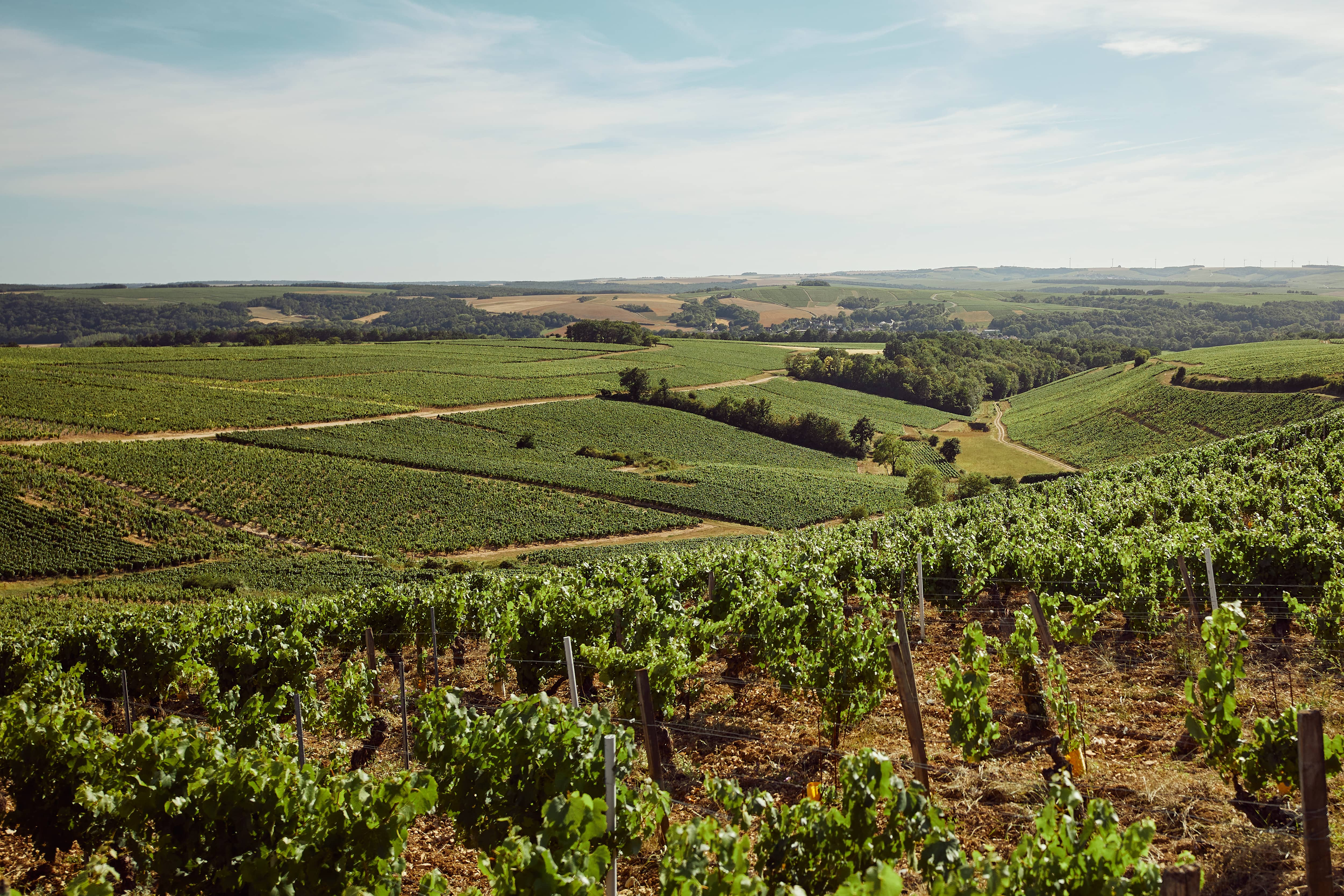Organic wine production at a vineyard in France