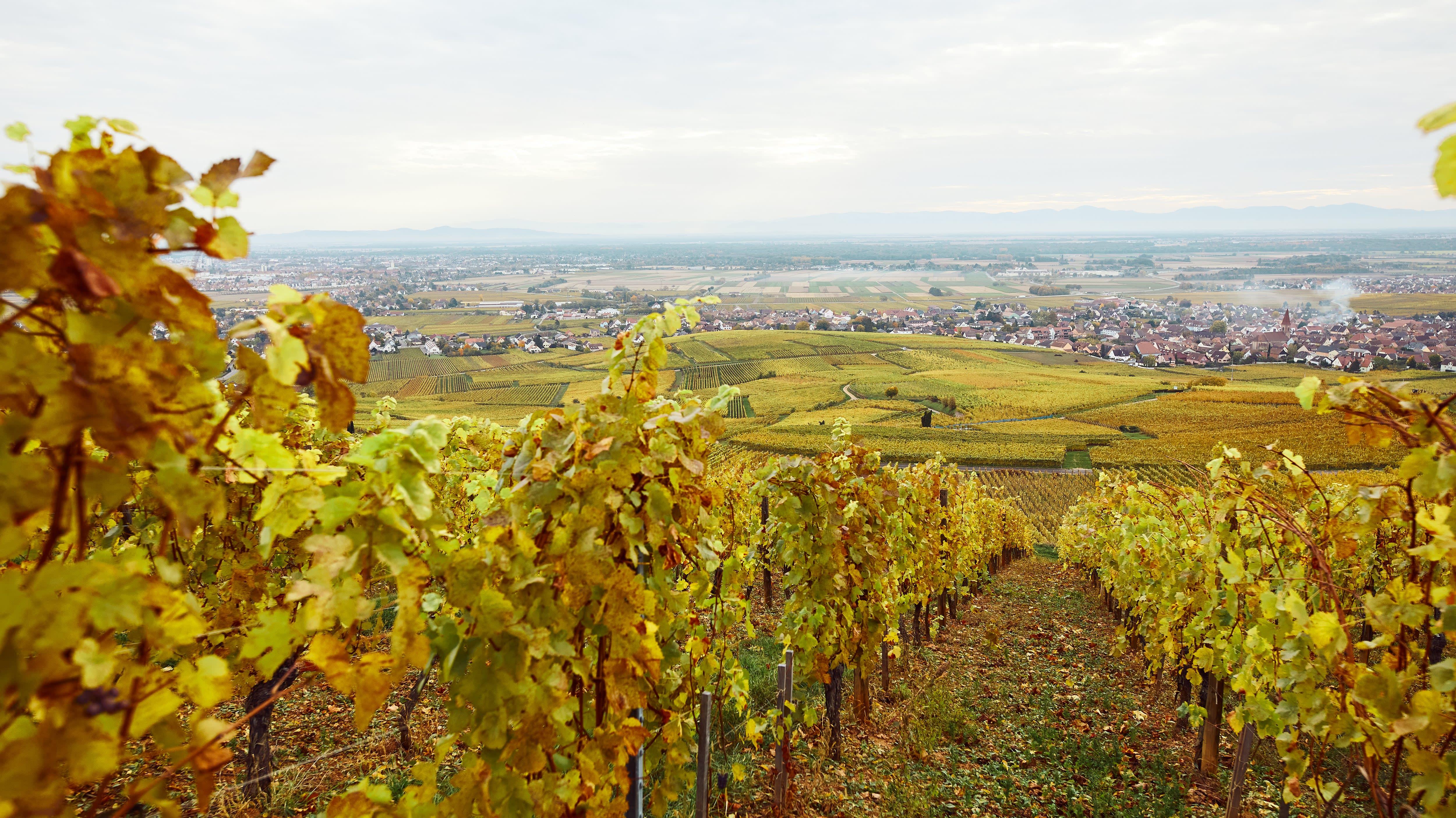 A wine appellation
