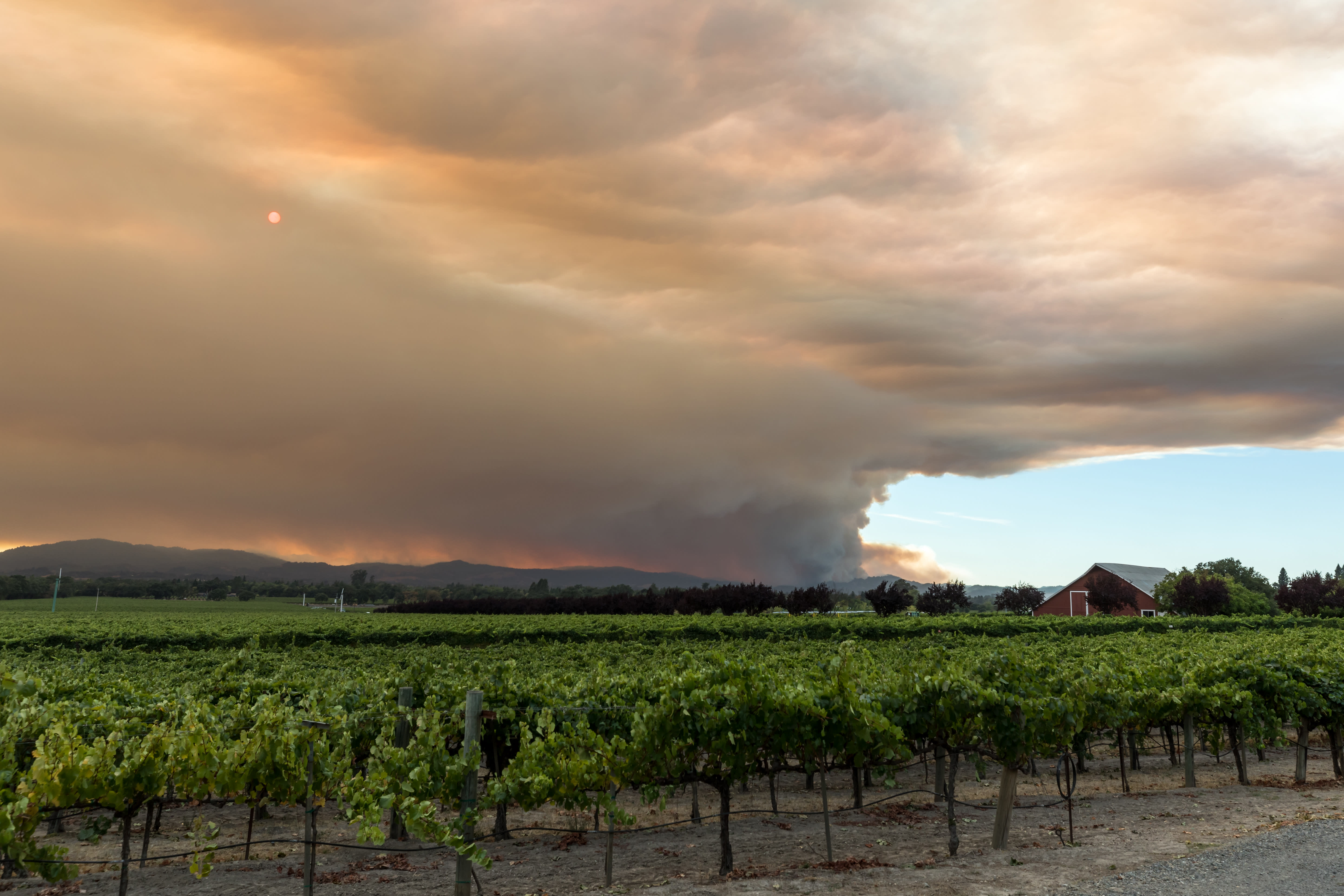 How Wildfires Have Endangered the Wine Industry