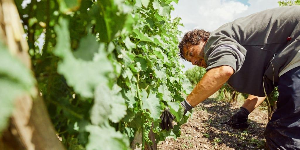 VIVANT winemaking partner