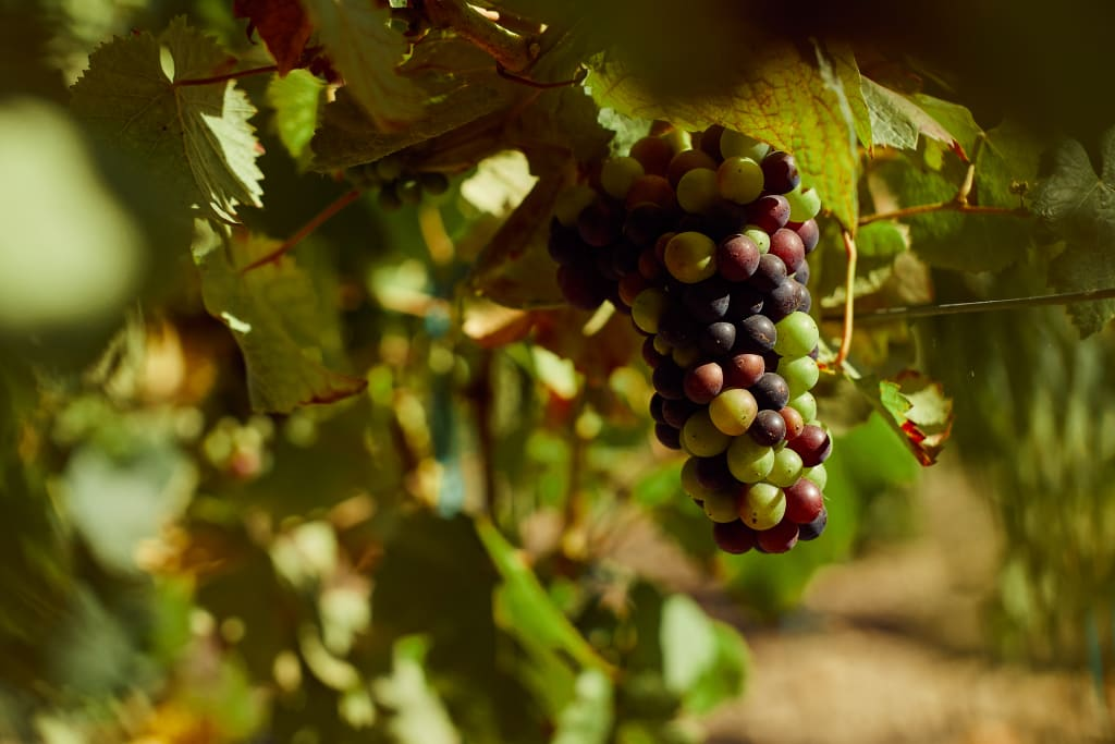 nature plays a key role in how wine is made