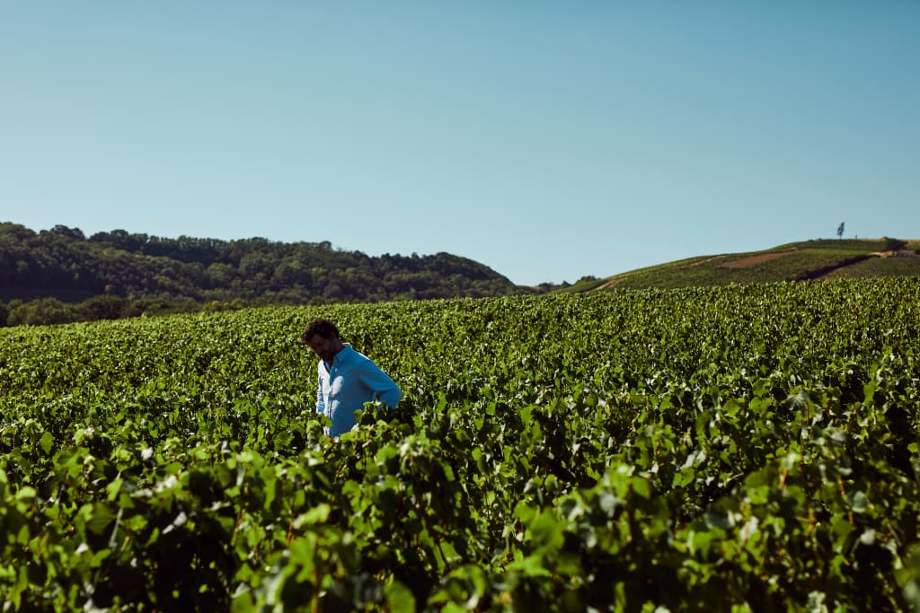 Natural wines start with healthy soils.