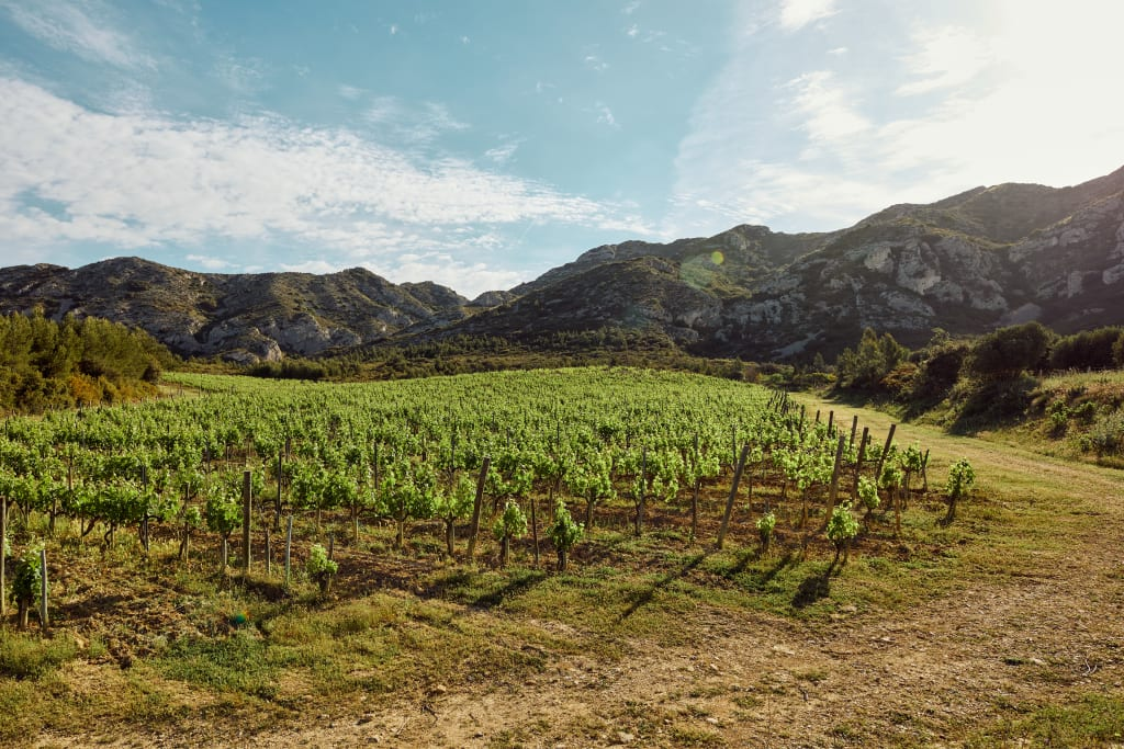 Provence Experiences on VIVANT