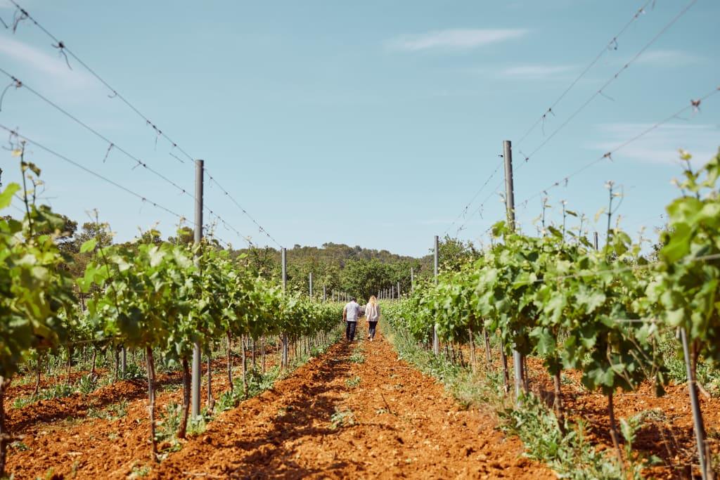 a biodynamic vineyard