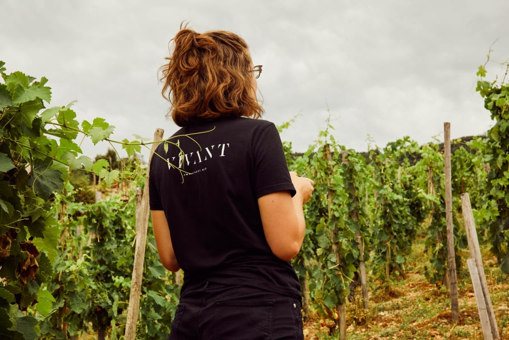 Want to work in the wine industry? VIVANT is hiring!