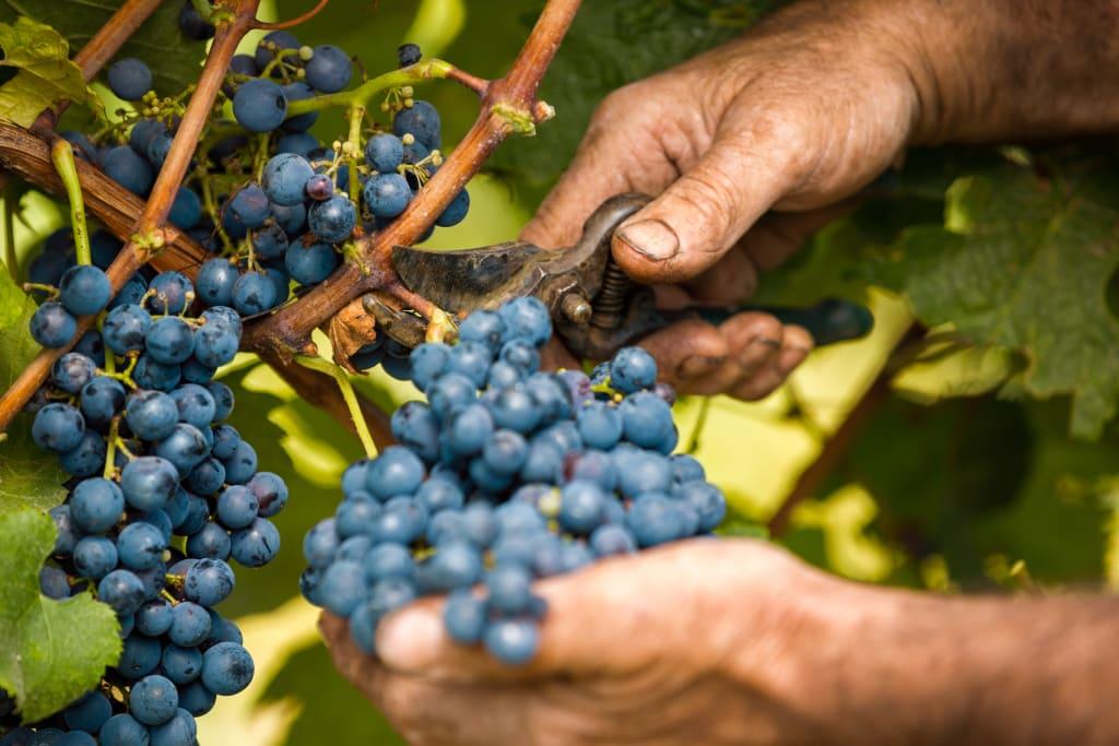 fair labor practices in winemaking