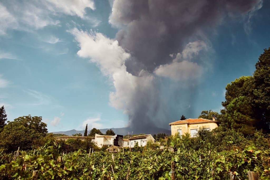 wines from volcanic soils