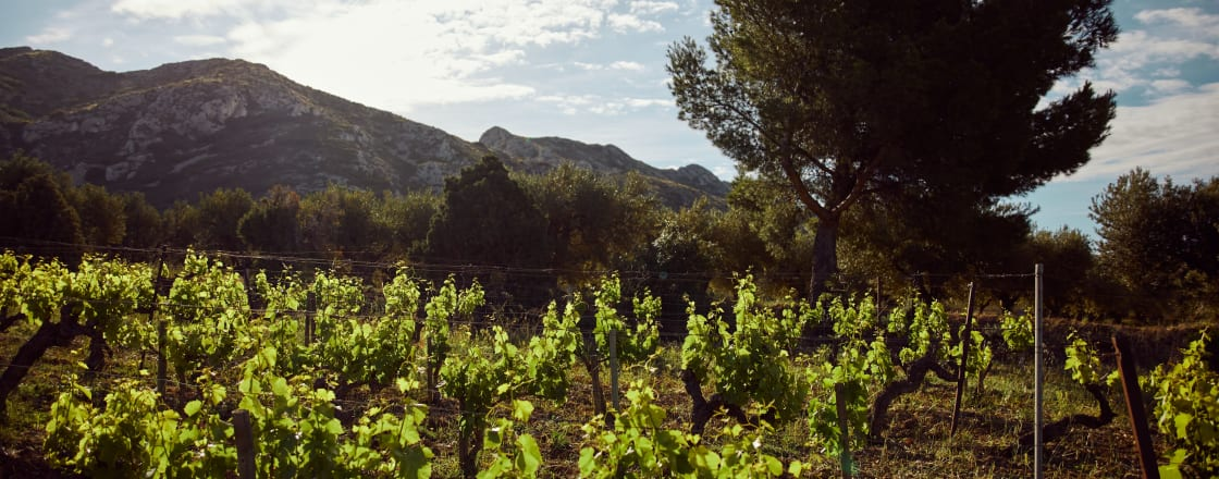 What We Can Learn About the Wines of Provence From Van Gogh's Paintings