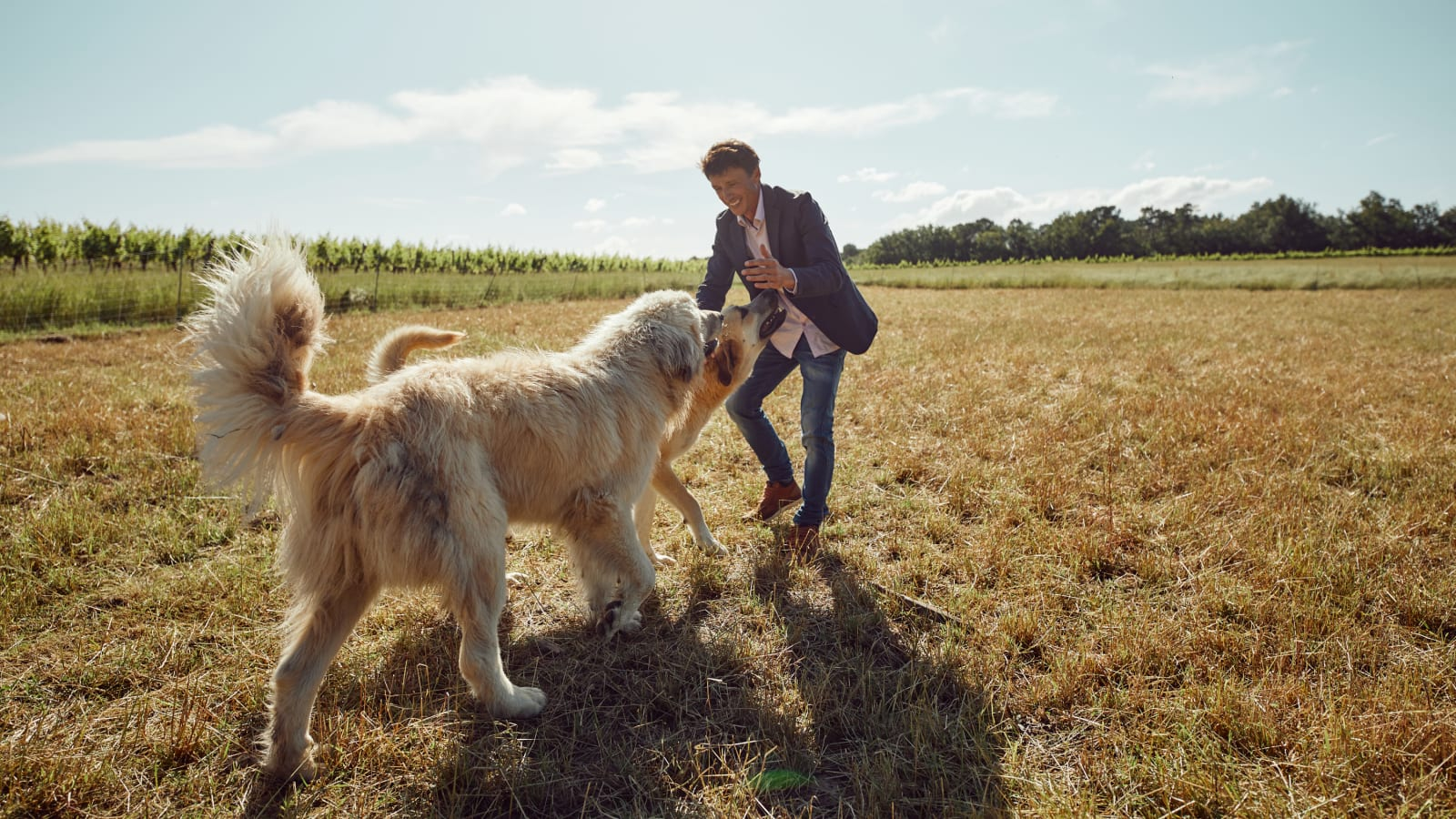 Wine Producer with dogs