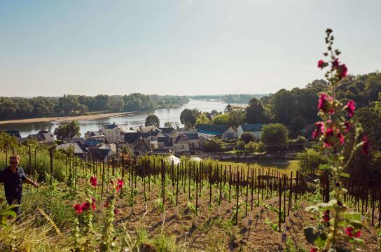 Loire Valley winemaker Frédéric Mabileau in his vineyard