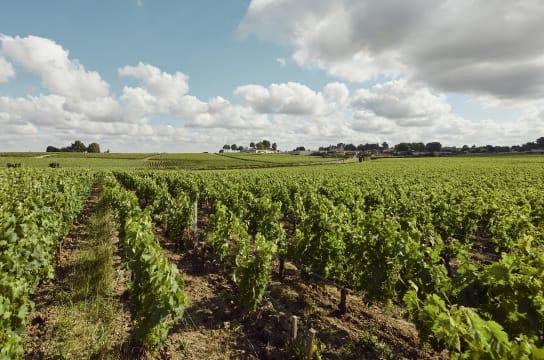 Château Haut-Bages Libéral vineyard in Bordeaux, France