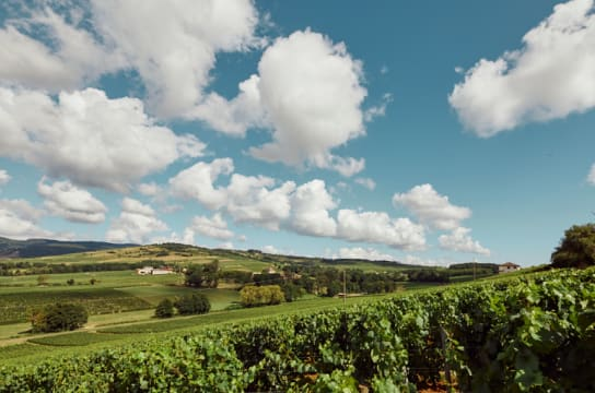 Region in Focus: Burgundy