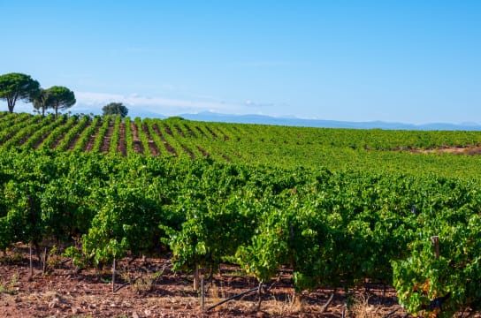 The Best Value French Wine Regions, According to the Experts