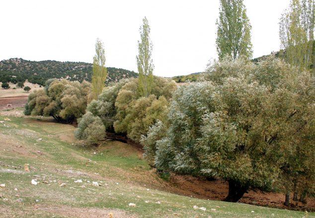 Kabakbaş Piknik ve Mesire Alanı - Durayda, Güneysınır, Konya