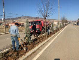 Mevlana Caddemizde Ağaçlandırma Çalışmaları