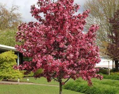 Çevre Düzenleme ve Ağaçlandırma