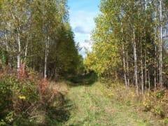 В Прикамье бабье лето не наступит: по крайней мере до 20 сентября погода будет пасмурной