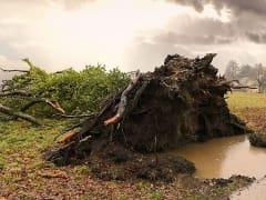 МЧС предупреждает о сильном ветре в Пермском крае 18 апреля