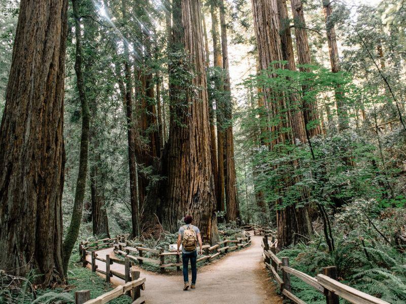 Man steht in einem Wald an einer Weggabelung