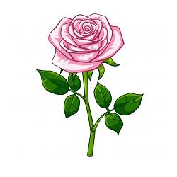 Rosita Grocery Logo