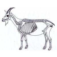 Hogan's Goat Pizza Logo