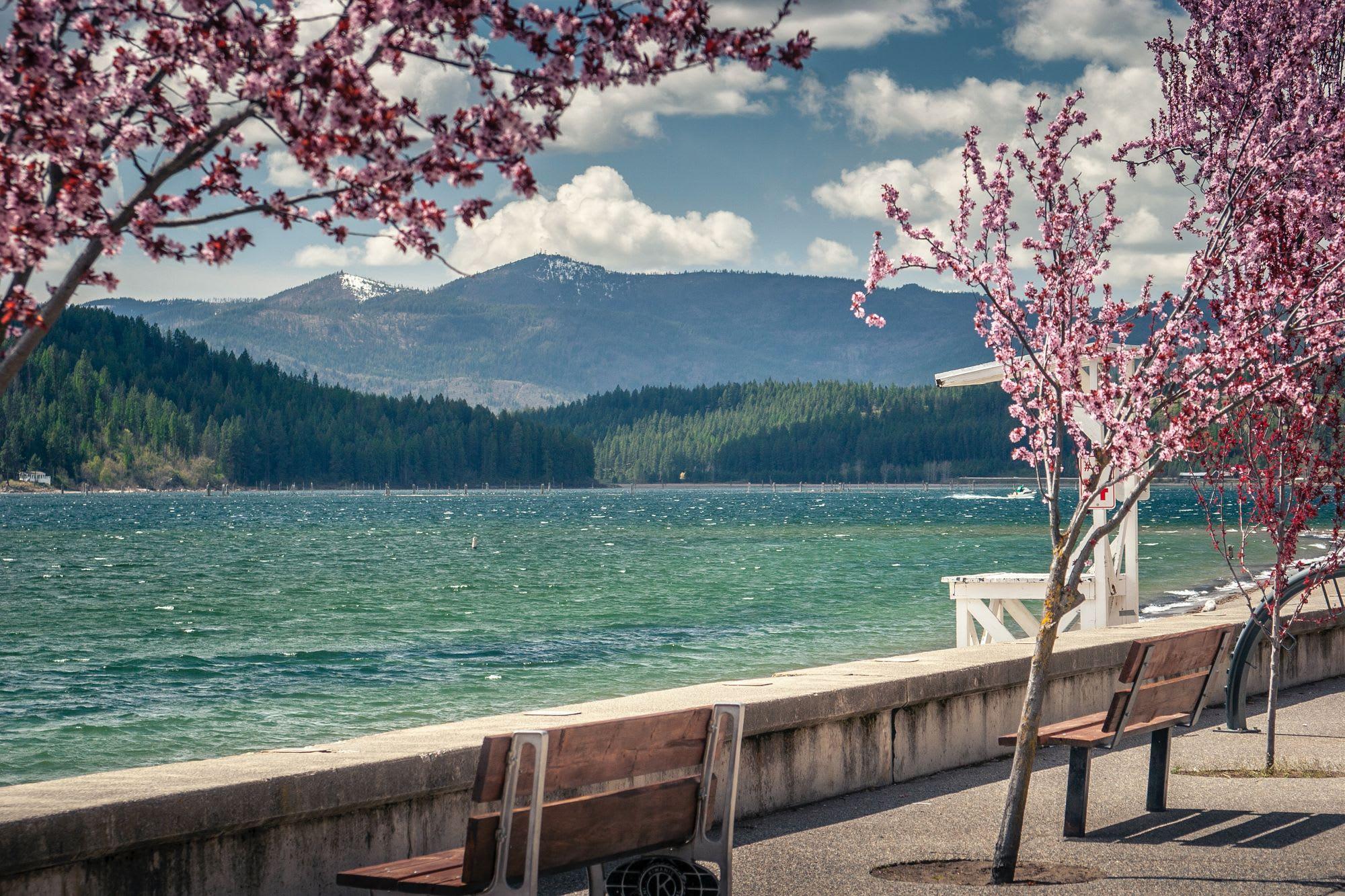 Background Image for Visualising Sakura (cherry-blossom)