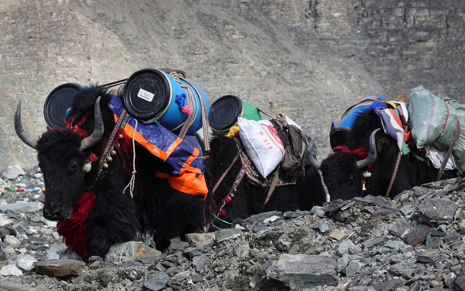 Mt. Everest, Nepal, Tibet