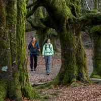Wanderszene im Wald von Gorbeia, Baskenland, Spanien.