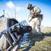 Imagefoto mit dem INNOX PRO GTX MID TF, LOWA USA Military Police Shooting