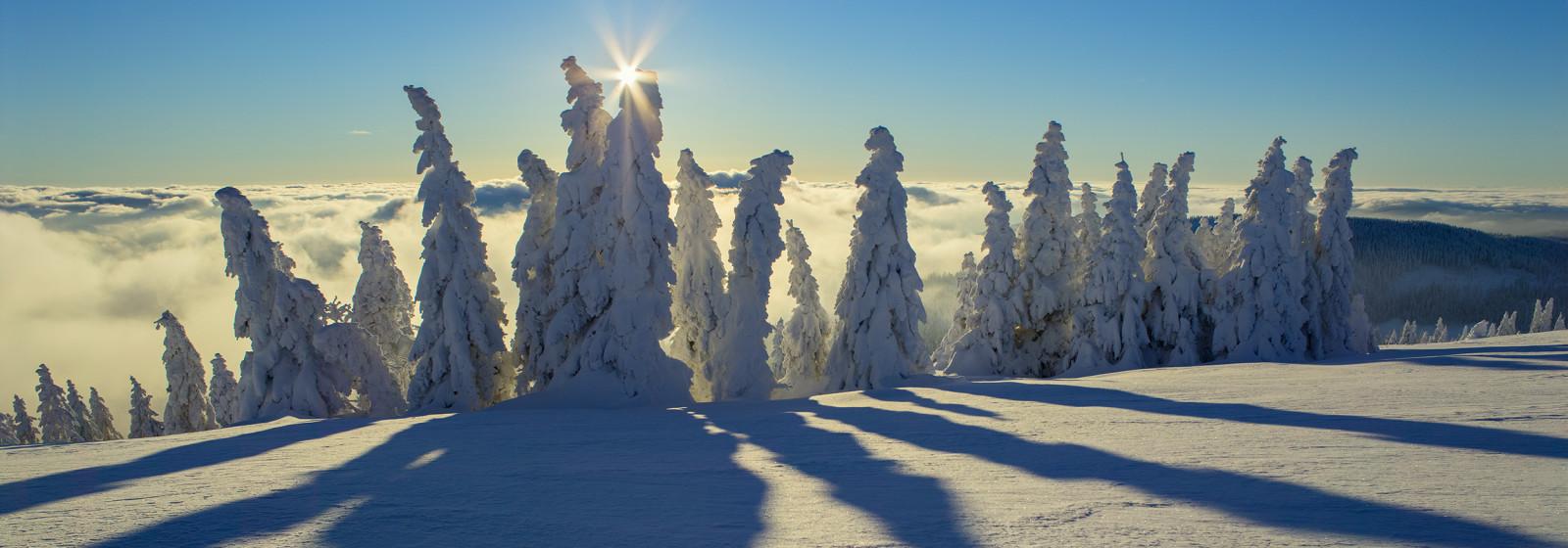 Winterwald im Gipfelbereich des Feldbergs, Schwarzwald, Baden-Wuertemberg, Deutschland