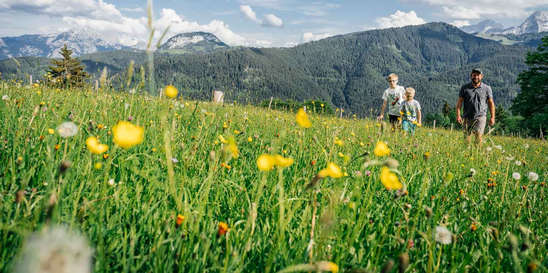 Salzburger Land Heutal
