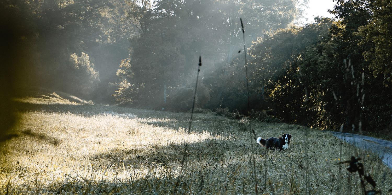 Tipps für Gassigeher im Herbst